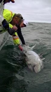 Giant Bluefin Tuna Charters